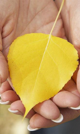 秋季落叶壁纸