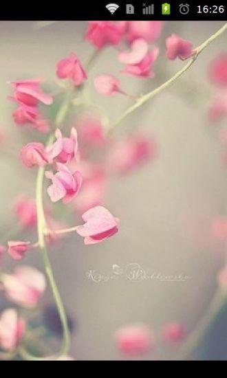 清新唯美花卉手机壁纸