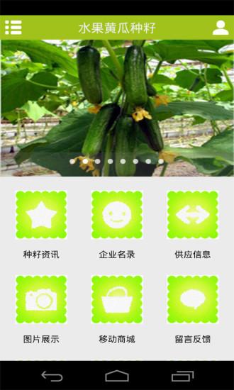 水果黄瓜种籽