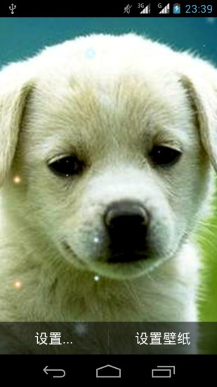 可爱狗狗动态壁纸