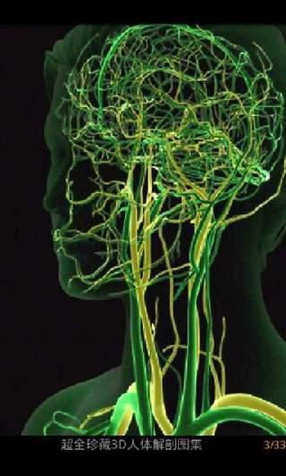 超全珍藏3D人体解剖图集