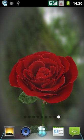 3D 动感玫瑰花