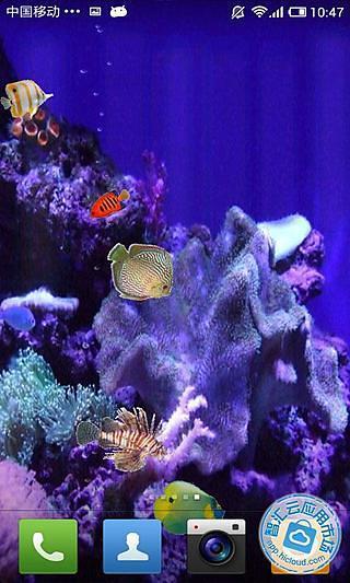 珊瑚一隅动态壁纸