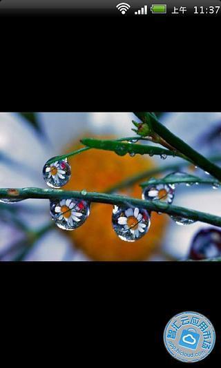 精美水珠微距摄影作品欣赏
