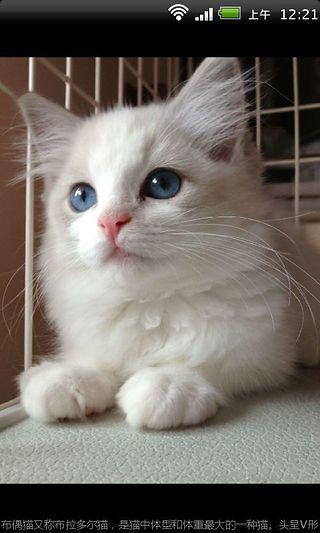 宠物猫种类图鉴百科