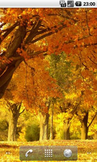 秋天落叶动态壁纸