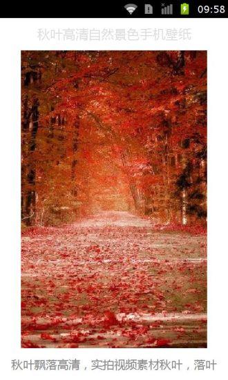 秋叶高清自然景色手机壁纸