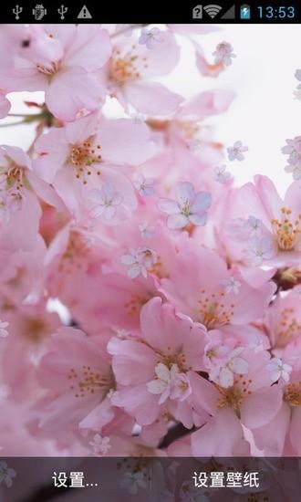 粉色桃花动态壁纸
