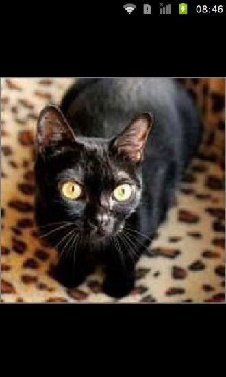 猫咪的种类图片大全