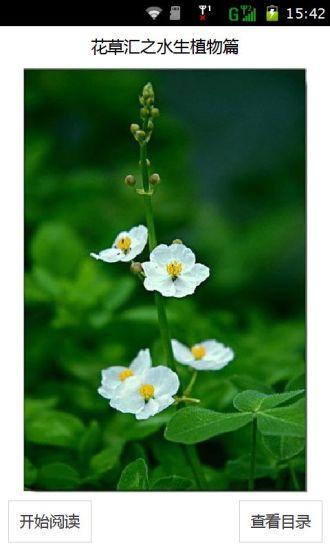 花草汇之水生植物篇