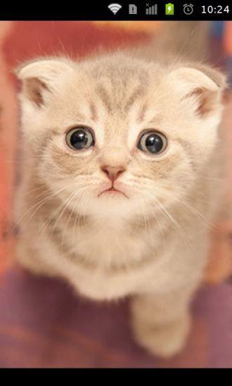 玩免費工具APP|下載可爱的猫猫壁纸 app不用錢|硬是要APP