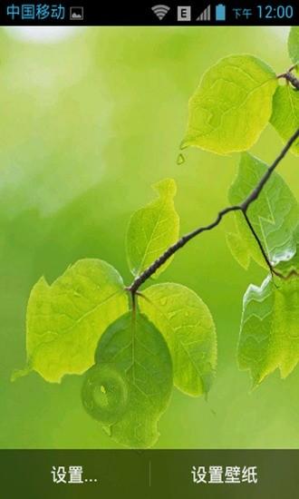 清新自然-动态壁纸