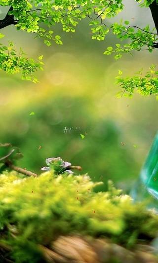 姬崇俊-绿豆动态壁纸