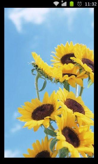 五彩花卉壁纸