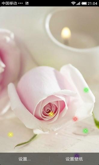 可人玫瑰动态壁纸