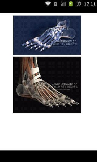 3D男女人体解剖图