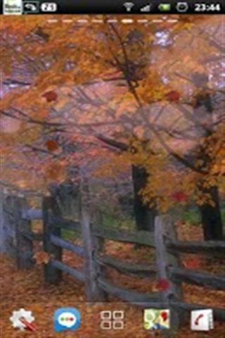 秋季红叶动态壁纸