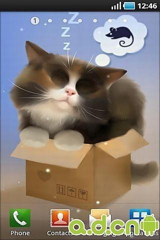 盒子猫动态壁纸