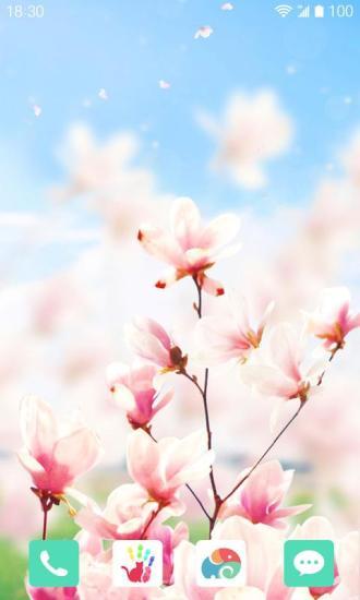 春日玉兰梦象动态壁纸