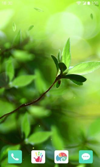一抹新绿梦象动态壁纸