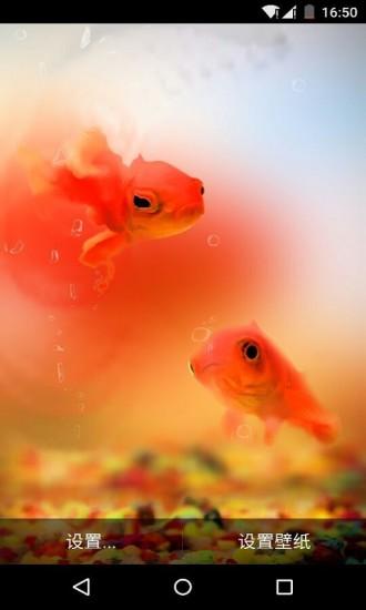 泡泡鱼水族馆动态壁纸