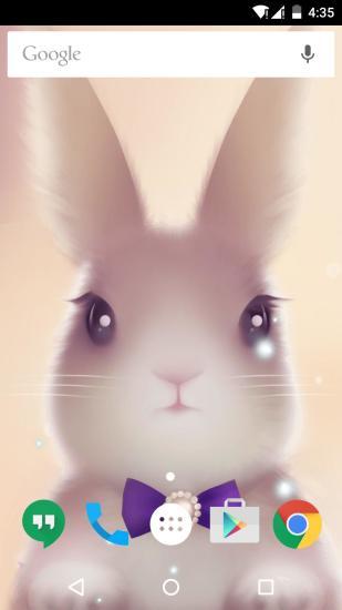 可爱呆萌兔子动态壁纸