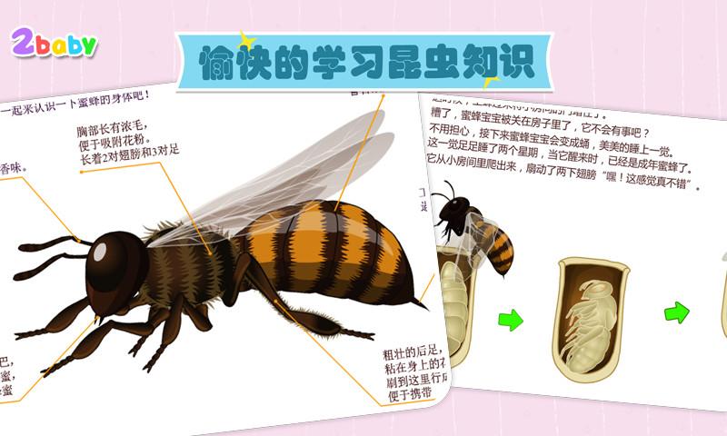 免費下載教育APP 昆虫世界一蜜蜂 app開箱文 APP開箱王