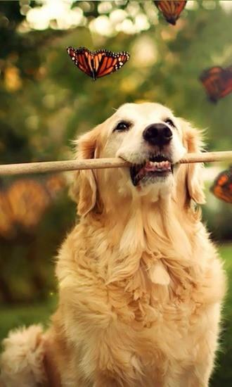我爱狗狗动态壁纸