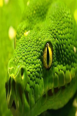 玩攝影App|蛇高清壁纸免費|APP試玩