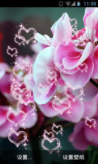 花.盛开动态壁纸