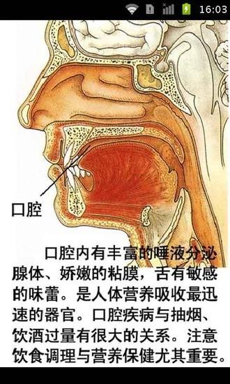 人体地图器官分析
