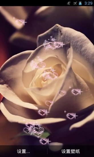 玫瑰恋语动态壁纸