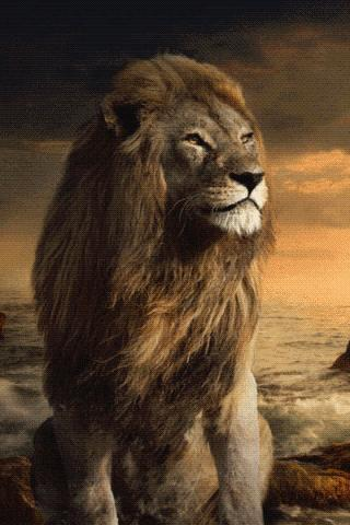 The Lion Live Wallpaper