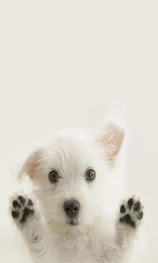 小狗互动的LWP