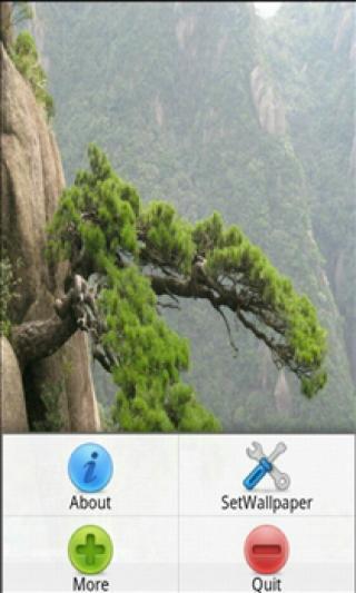 松树摄影图