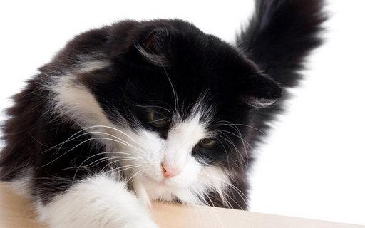可爱猫咪盒子V2