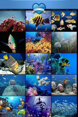 高清海底世界壁纸