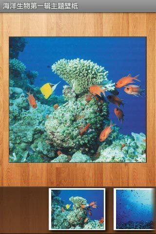 海洋生物第一辑主题壁纸