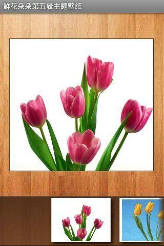 鲜花朵朵第五辑主题壁纸