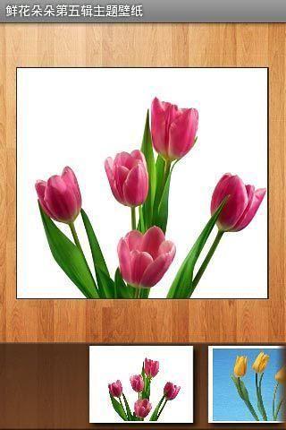 玩免費工具APP|下載鲜花朵朵第五辑主题壁纸 app不用錢|硬是要APP