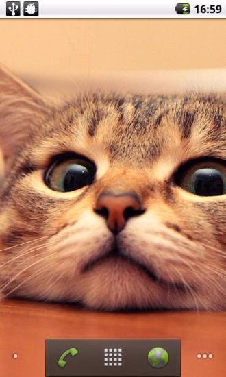 超萌小猫动态壁纸