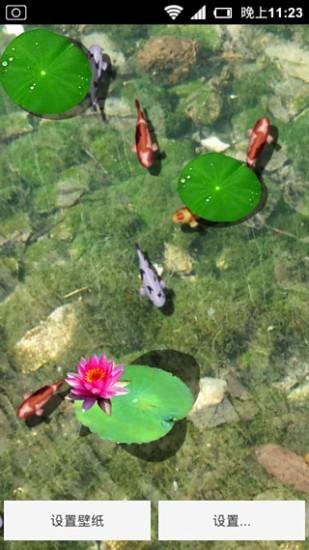 免費下載攝影APP|3D养金鱼动态壁纸 app開箱文|APP開箱王