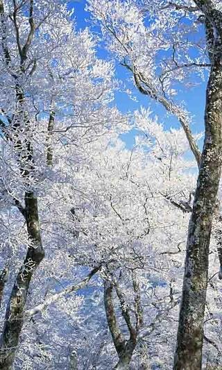 香山雪景高清动态壁纸