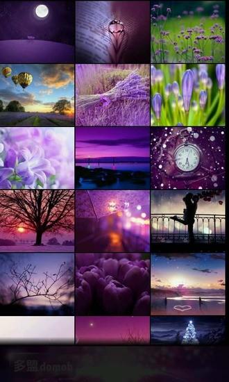 紫色迷情高清壁纸