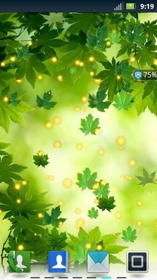 绿色枫叶动态壁纸