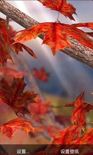 秋日落叶动态壁纸