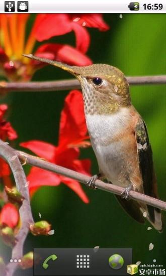 可爱小鸟动态壁纸