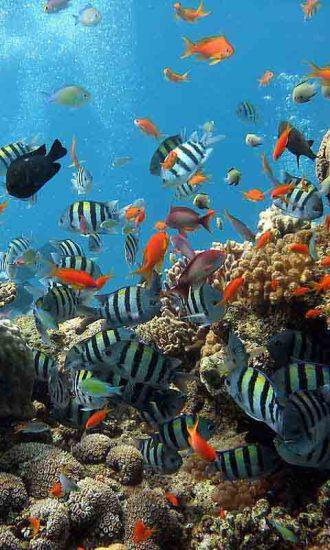 海底世界动态高清壁纸