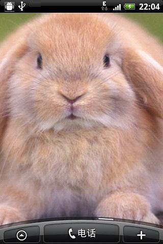 可爱小兔主题动态壁纸