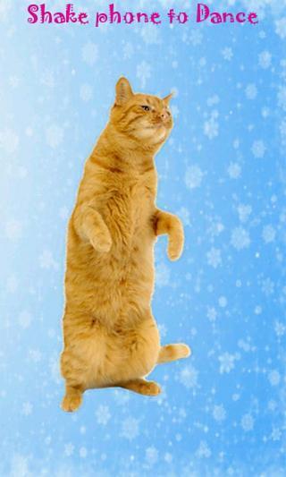 会跳舞的猫